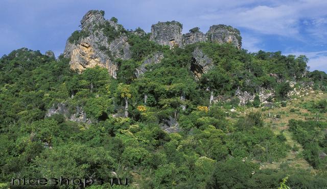 Tropicheskie-lesa-mira