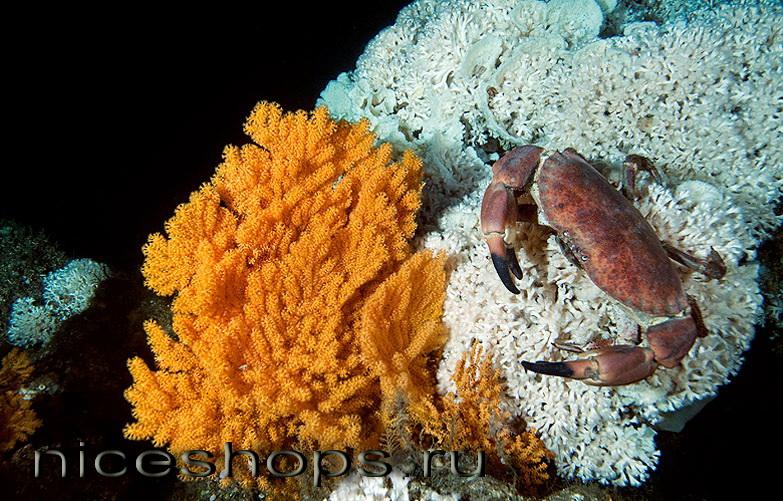 korallovye-rify-Norvegii