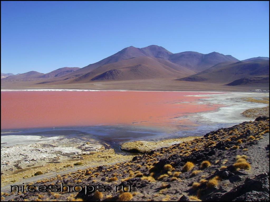 Rozovoe-ozero-Laguna-Kolorado-v-Bolivii
