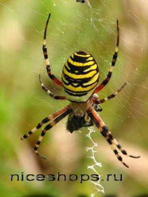 udivitelnyj-mir-paukov
