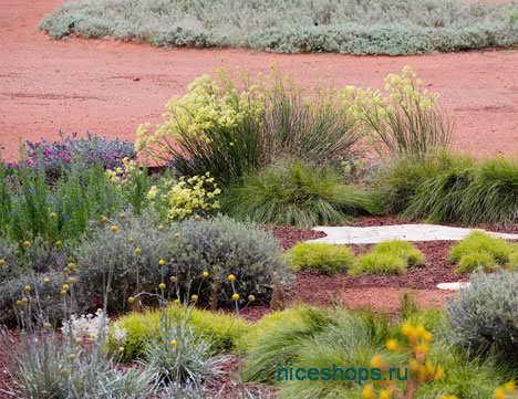 parki-mira-The-Australian-Garden
