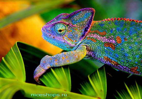 kak-menyaet-cvet-hameleon