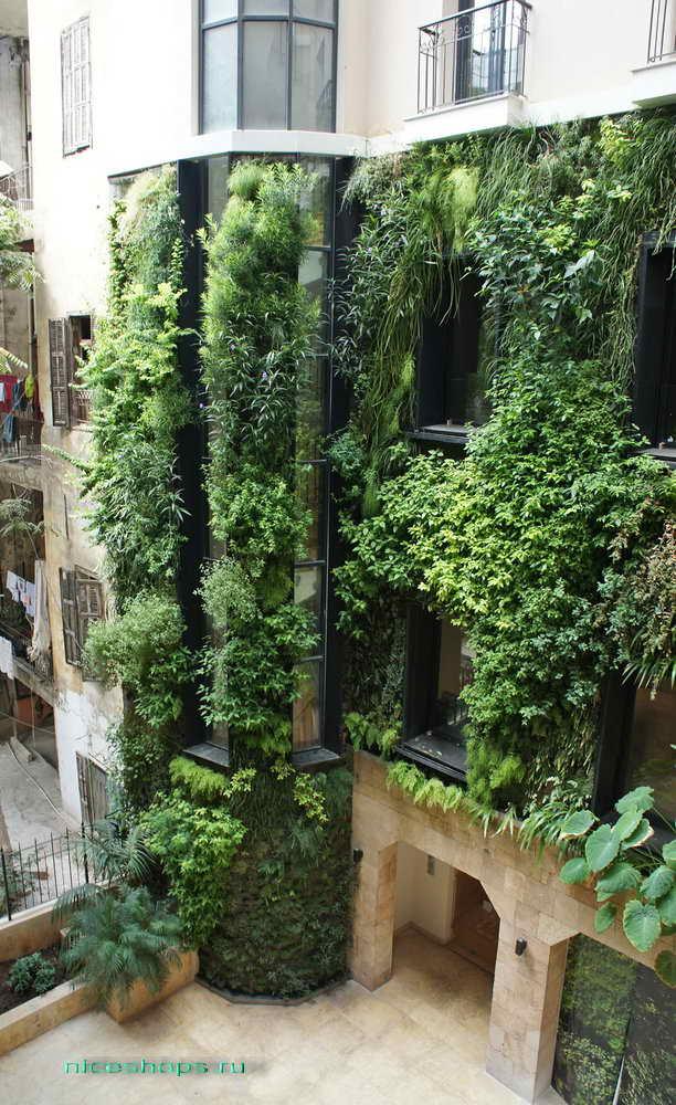 vertikalnoe-ozelenenie-chastnogo-doma-Patrick-Blanc-Beirut