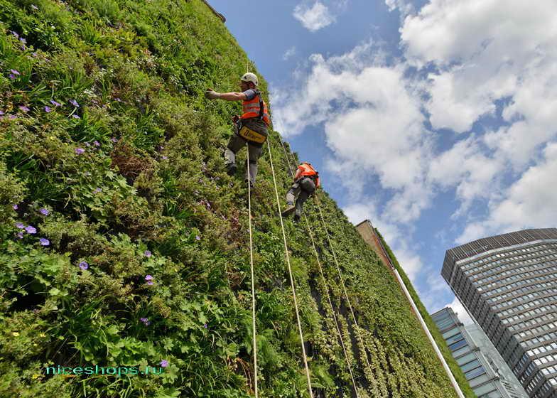 vertikalnoe-ozelenenie-goroda-London-rubens-hotel-2