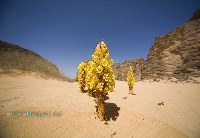 zagadki-pustyni-sahary-rasteniya-2