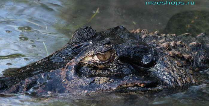 Крокодилы реки Амазонки