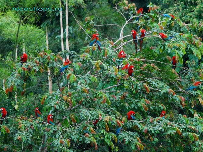 Попугаи из тропических лесов реки Амазонки