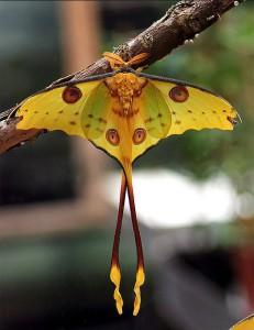 Мир бабочек - красота преображения
