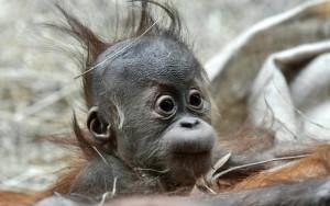 Про обезьян интересно