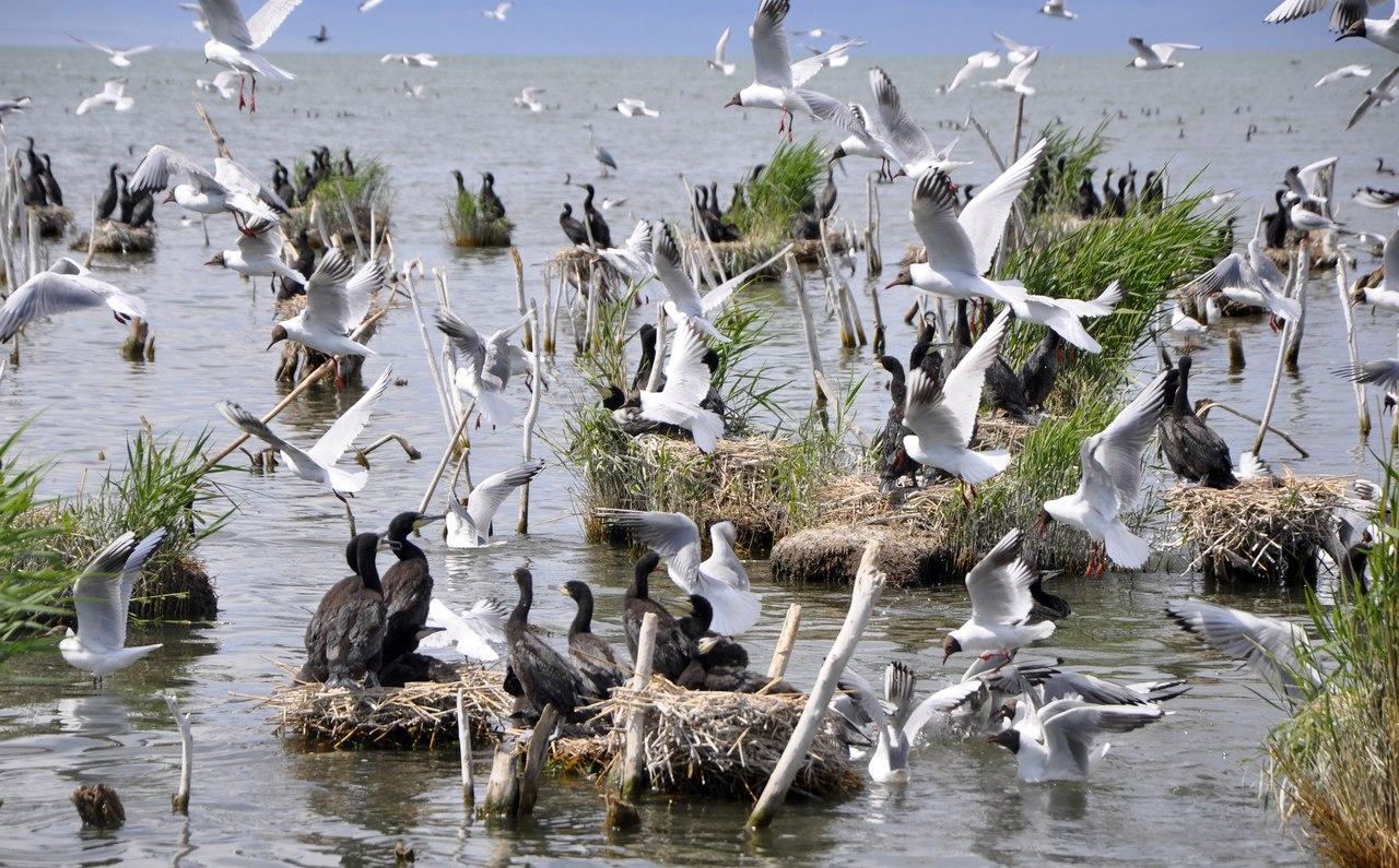 Птицы Убсунурской котловины