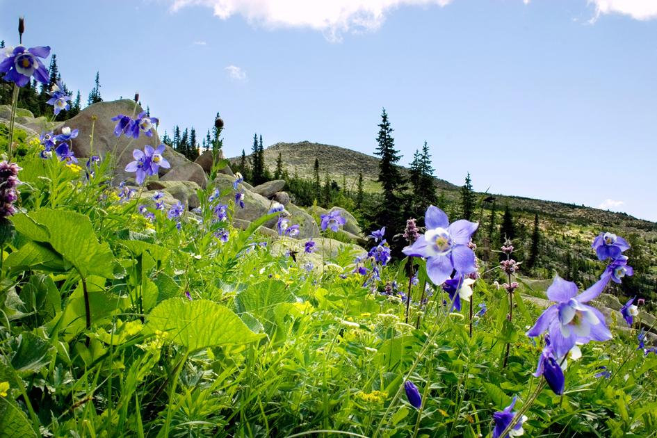 Биосферный заповедник в  горах Алтая