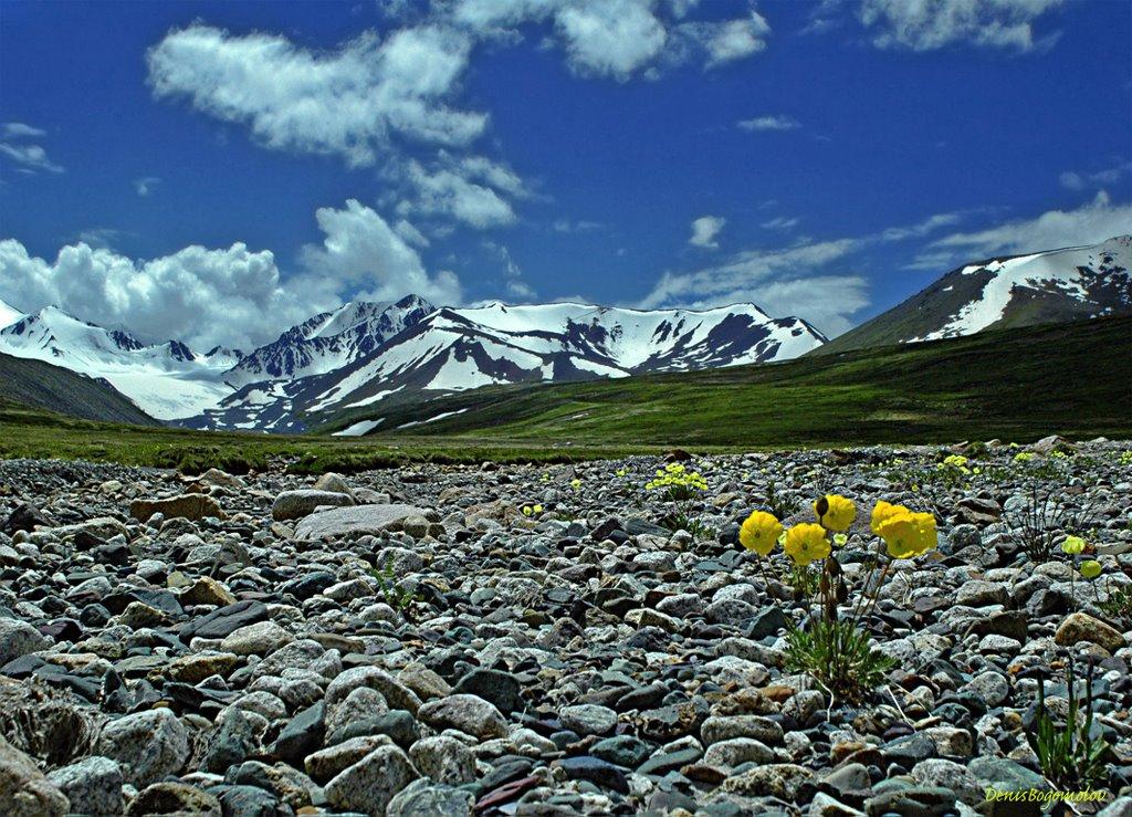 Плато Укок в  горах Алтая