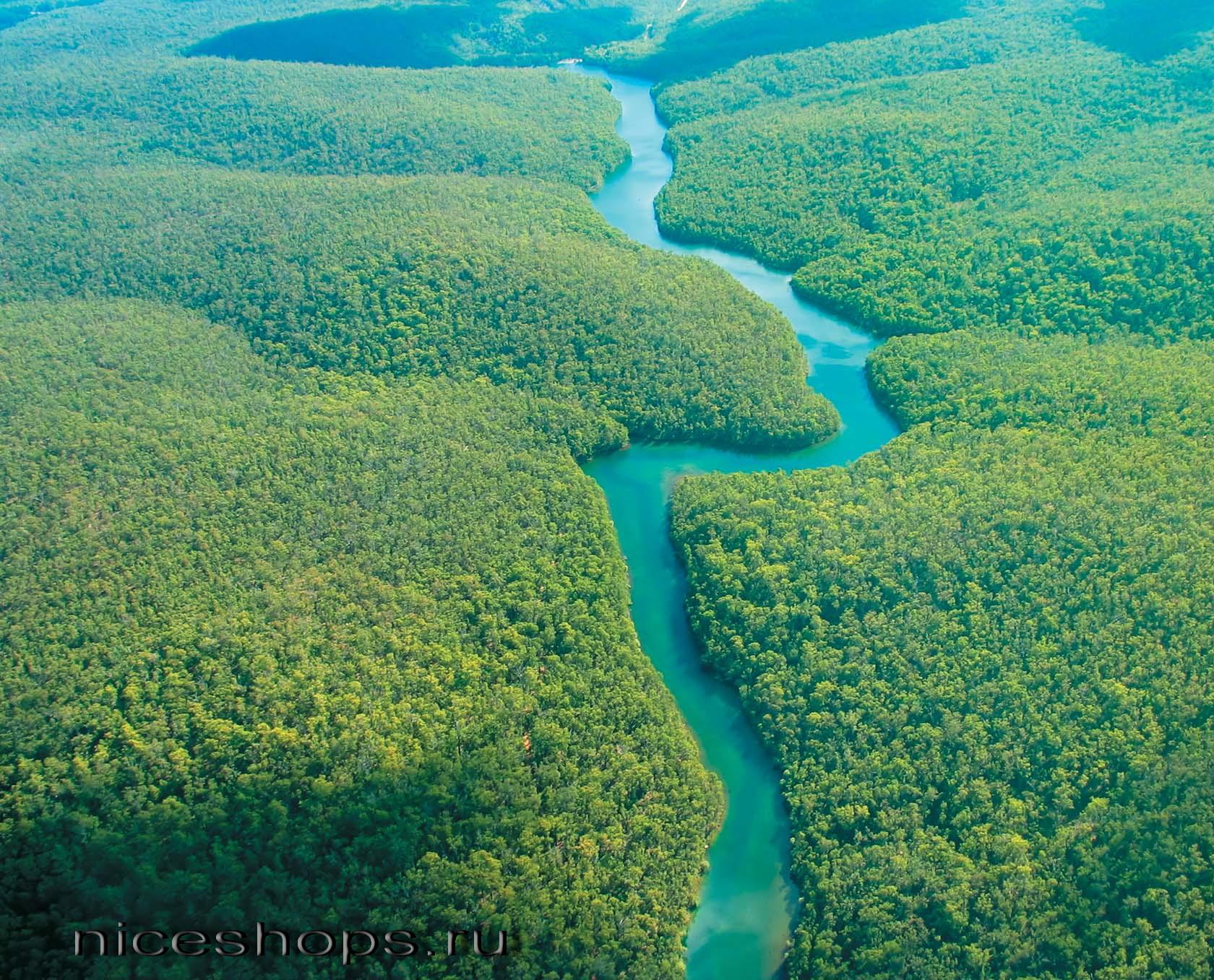 Zony-lesov-mira-tropicheskie-lesa-Amazonki