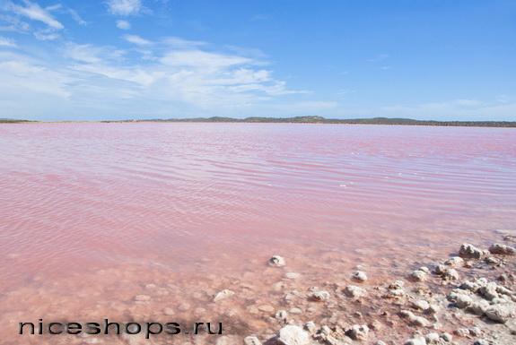 Karotinoidy-v-vode-solenogo-ozera-Juta