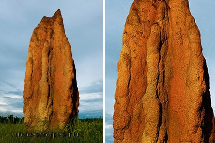 Termitnik-avstralijskih-termitov