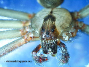 udivitelnyj-mir-paukov-poslednie-issledovaniya-uchenyx