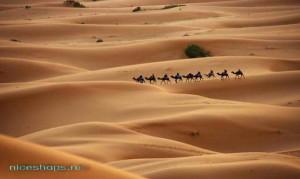 Пустыня Сахара: тайны, загадки, факты
