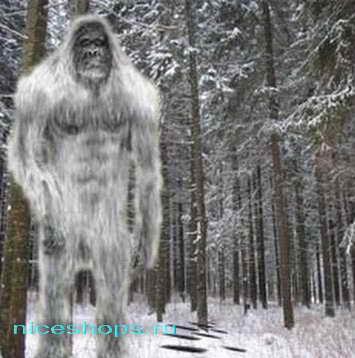 Снежный человек догадки, истории, мифы