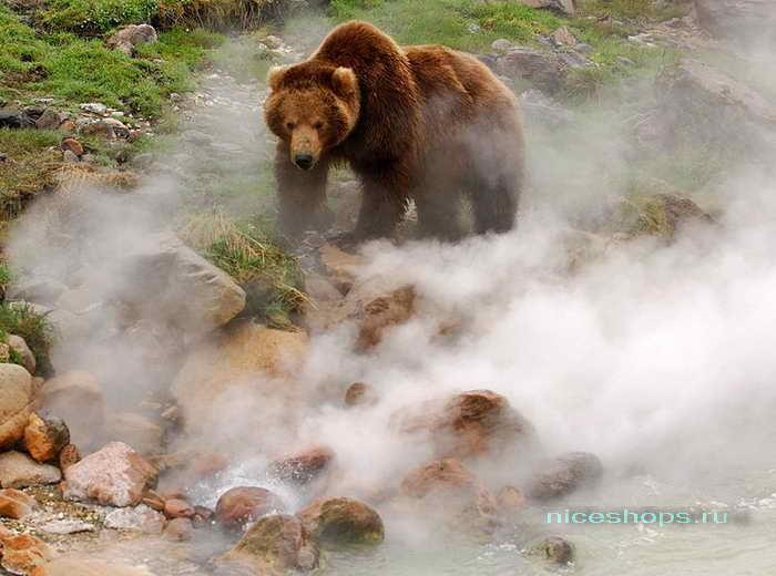 Животный мир Долины гейзеров на Камчатке