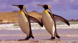 Tolstye-pingviny-krepche-stojat-na-nogah