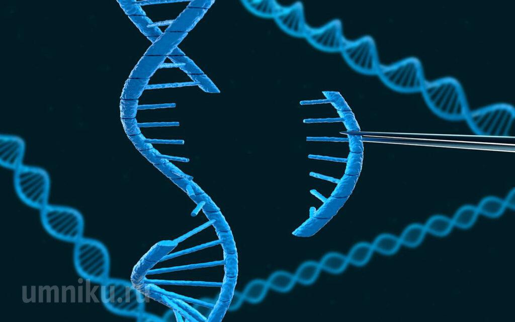 Копирование гена ДНК